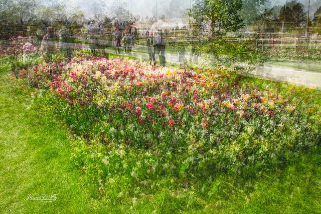 Tulips at Longwood Gardens 01-4