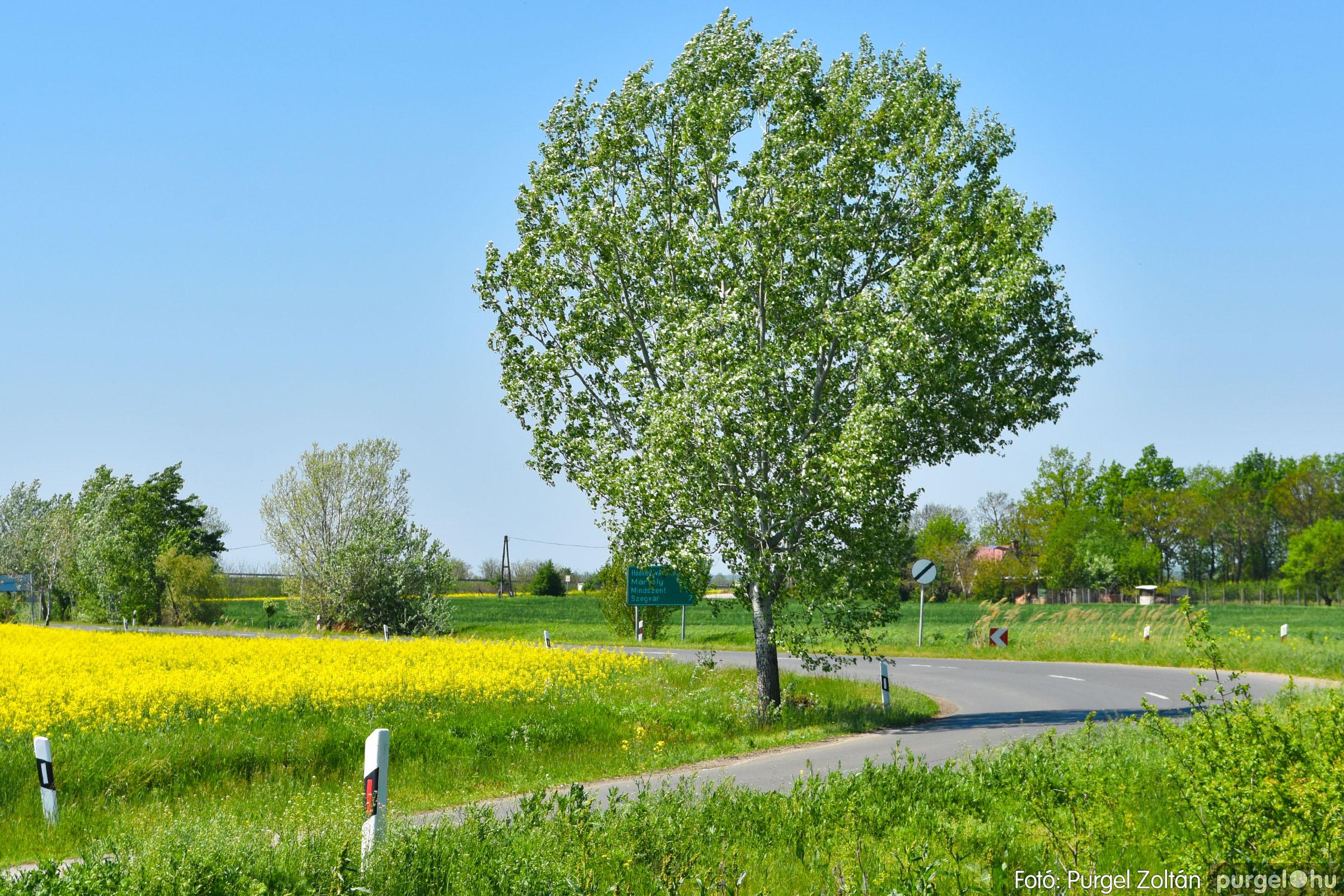 2021.05.04. 006 Virágzó repcemező Szentes határában - Fotó:PURGEL ZOLTÁN© DSC_4351q.jpg