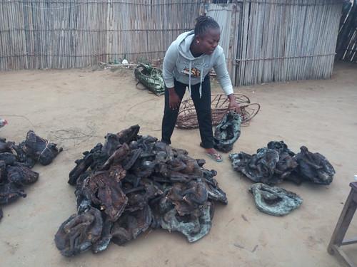 Julie examines bushmeat load on arrival Bafundo