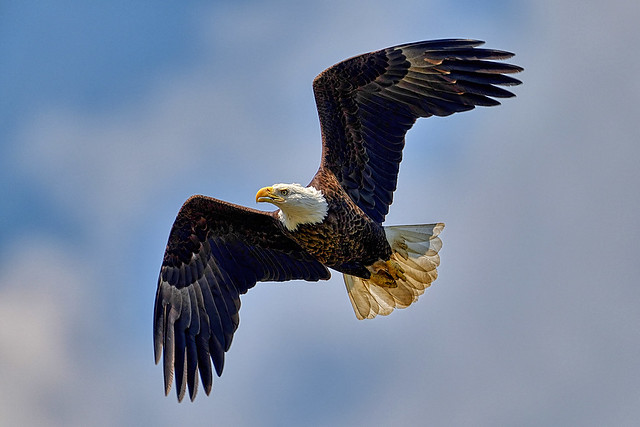 Soaring over the river.