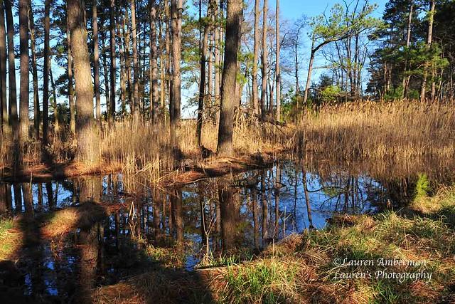 Marsh reflections (*EXPLORE 05.05.21*)