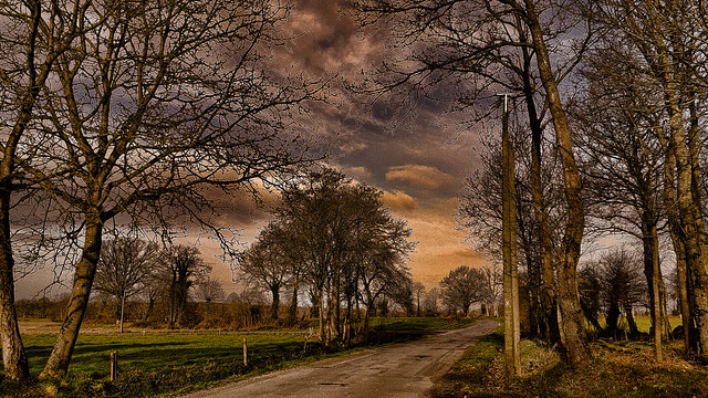 La route et les arbres.
