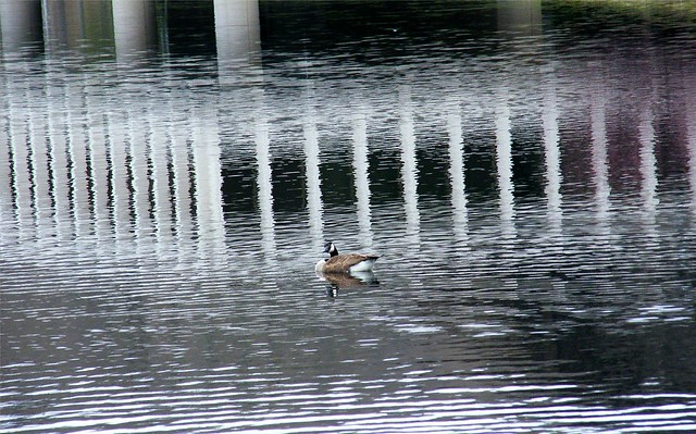 Goose and Reflected Architecture