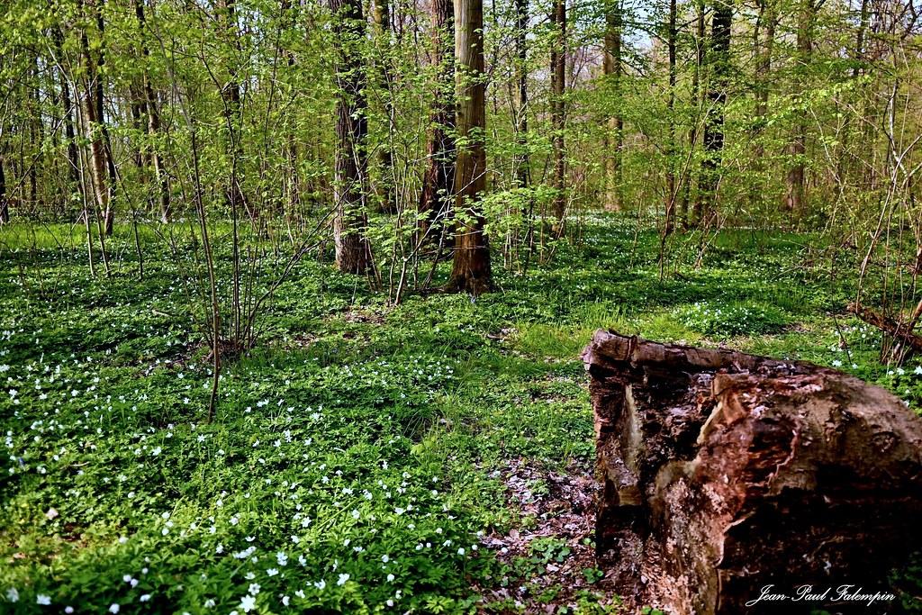 Nature April