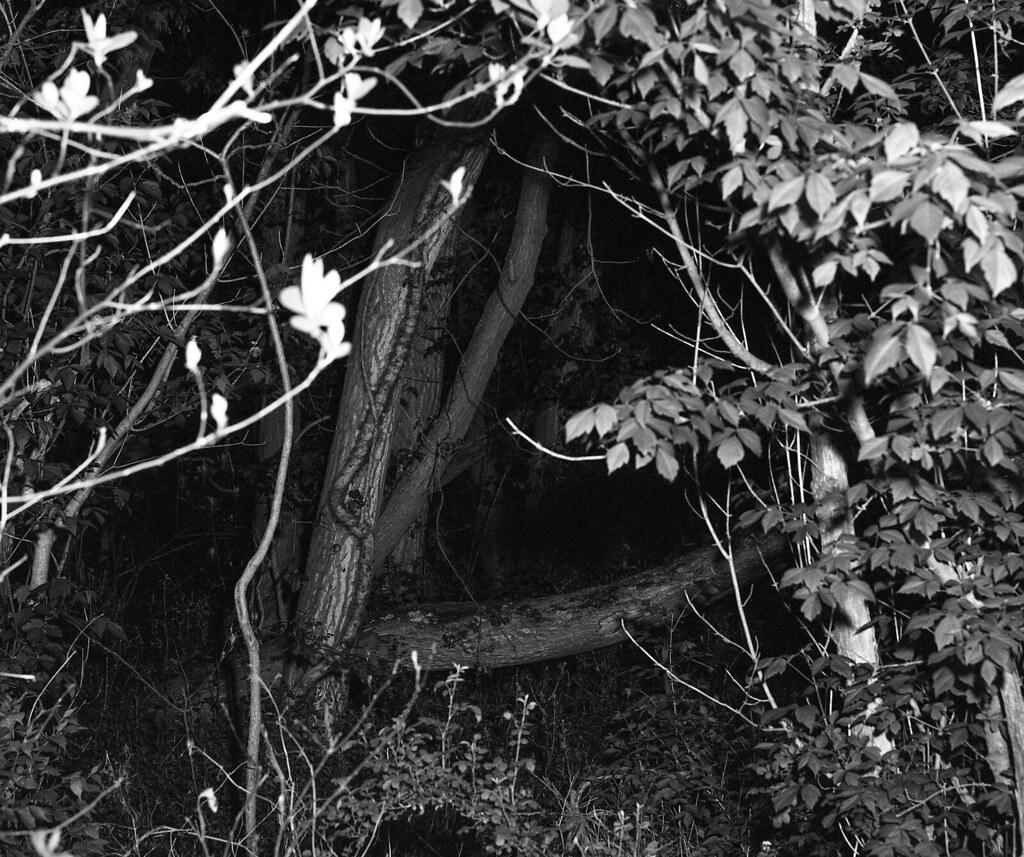 Woods at night - Lumberton, NJ