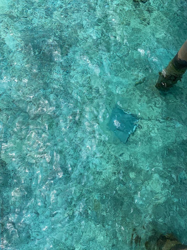 Maledives-(39)