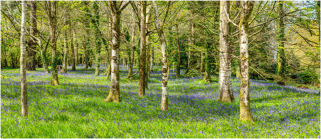 Woodland Carpet ...