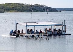 Oyster tour.jpg
