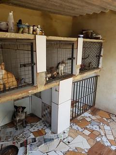 Unser Tierheim