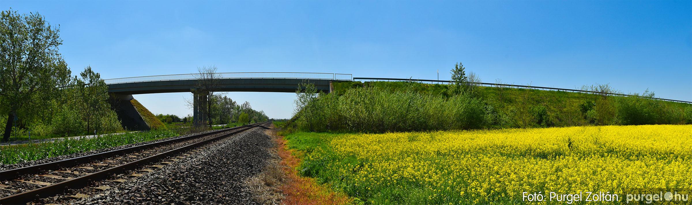 2021.05.04. 001 Virágzó repcemező Szentes határában - Fotó:PURGEL ZOLTÁN© DSC_4342q.jpg