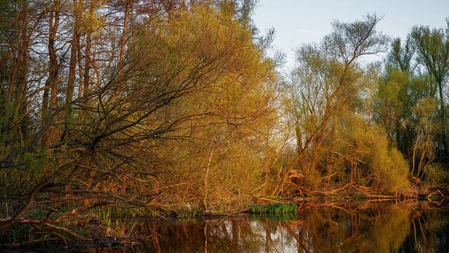 Springtime at the riverbank - Frühling am Flußufer