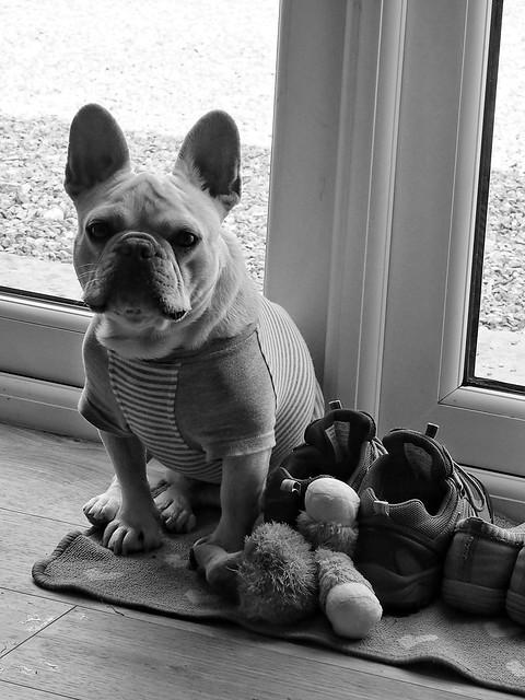 Sam in black and white