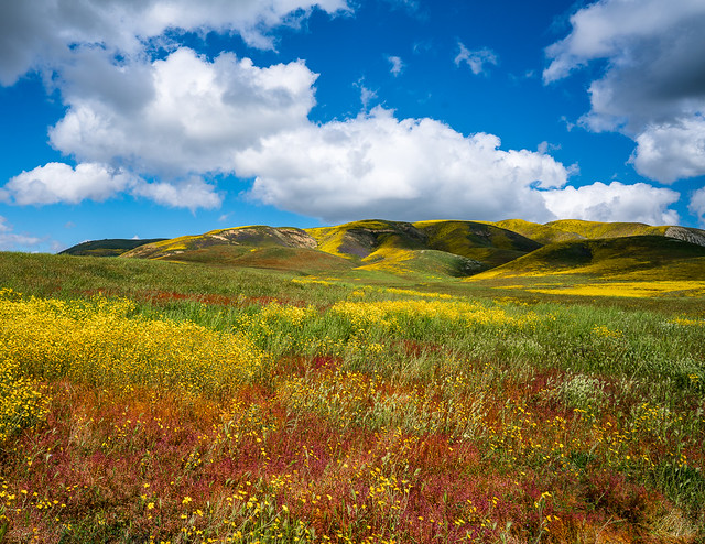 Color Palette of the California Grassland