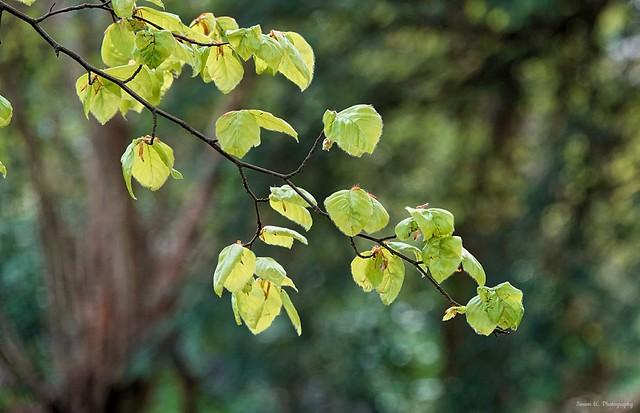 Confetti of leaves. April 2021 [in explore] (Flickr Explore)