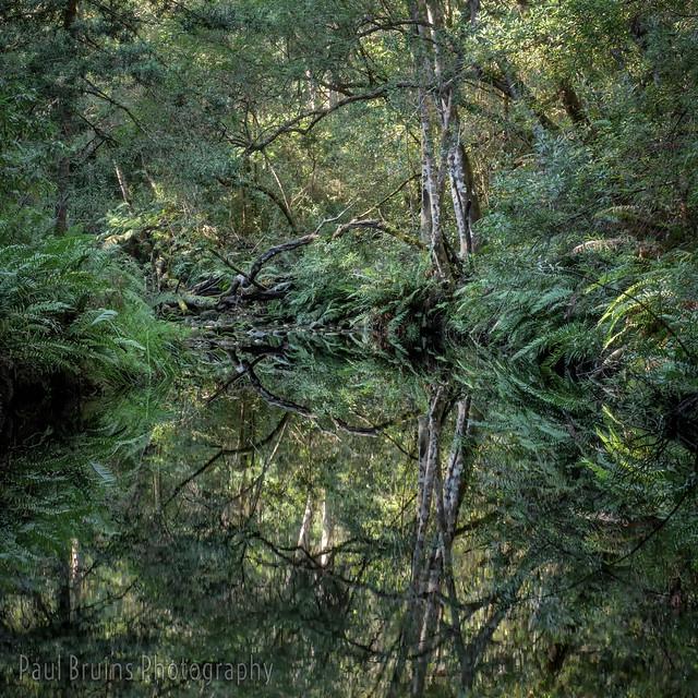 Jubilee Creek Reflections