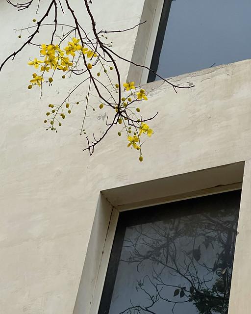 City Season - Amaltas Bloom, Green Park & Elsewhere