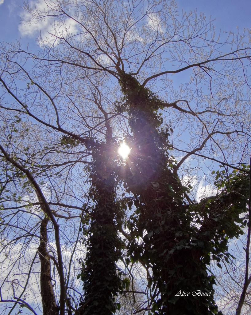Soleil à travers l'arbre