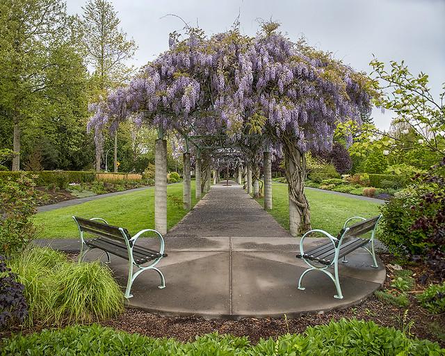 Wisteria Arbor at Fleetwood Gardens