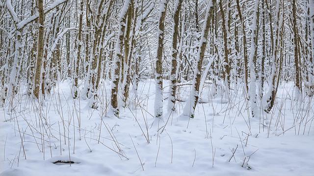 lockdown wood | Auchterarder | Perthshire