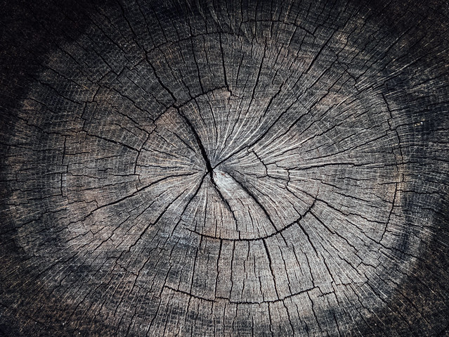 Close-up of an old tree stump with cracks