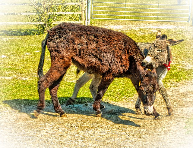 2021 04APR16 - DONKEY SANCTUARY NOT JUST THE WIND IS BITING!