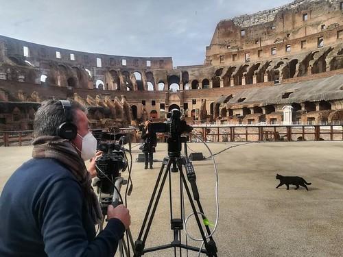 """ROMA ARCHEOLOGICA e RESTAURO ARCHITETTURA 2021: Colosseo, addio alla gatta Nerina, l'ultima """"pantera"""" dell'arena. Lutto all'Anfiteatro Flavio. Il Mess. (04/05/2021) & """"Nerina - social manager!""""; in: Parco archeologico del Colosseo (2-3/05/2021)."""