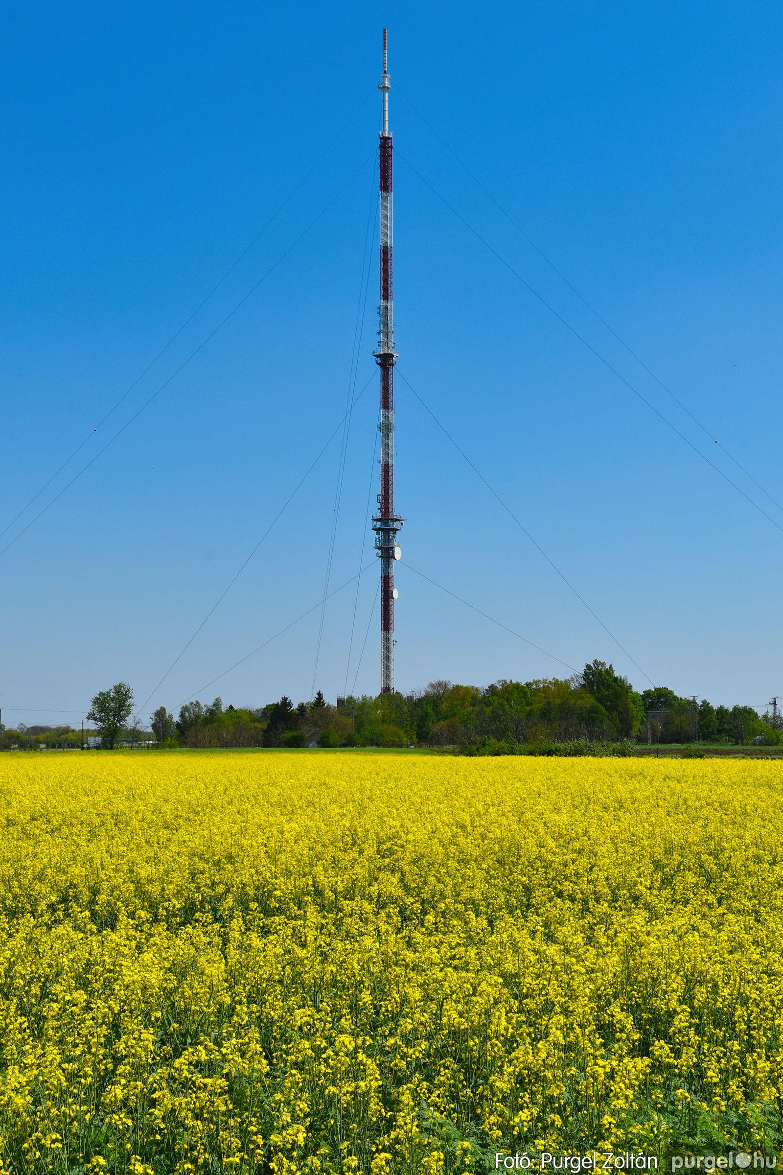 2021.05.04. 008 Virágzó repcemező Szentes határában - Fotó:PURGEL ZOLTÁN© DSC_4353q.jpg