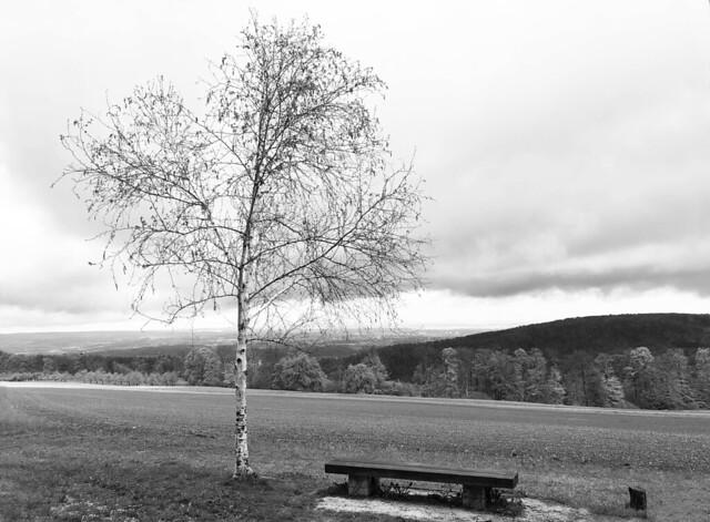 Birke wippt im Wind