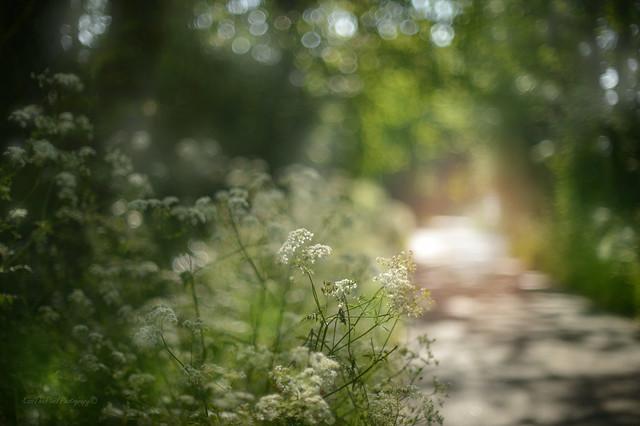 Morning walk....