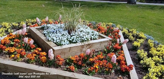Flowerbeds (with inserts) near Huntingdon bus station 24th April 2021 001