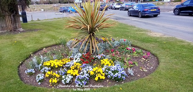 Flowerbed on Ring Road Huntingdon 1st May 2021