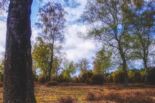 The first green makes the heather shine / Das erste Grün lässt die Heide leuchten