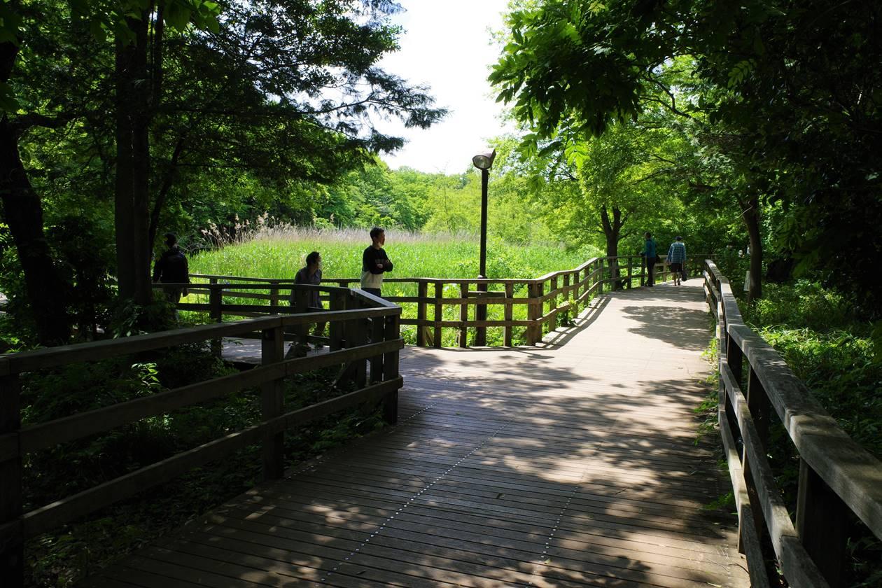 石神井公園・木道