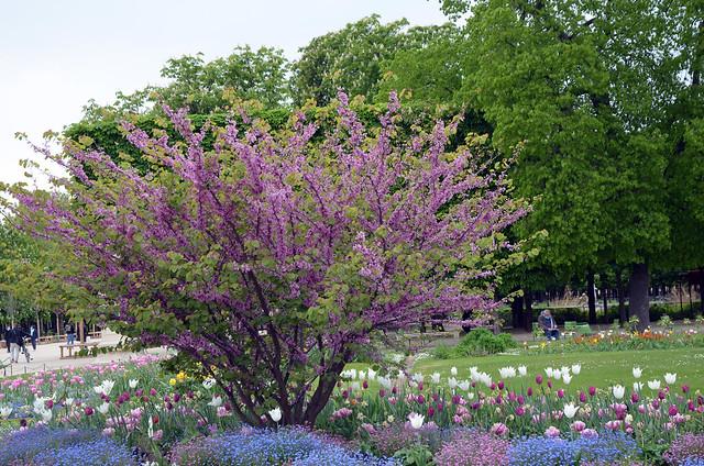 2021.04.30.023 PARIS - Le jardin des Tuileries