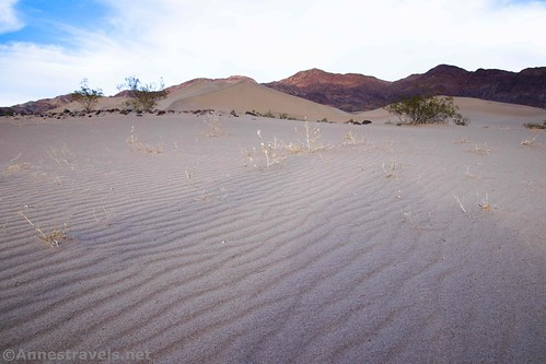 At the edge of the Ibex Dune Field, Death Valley National Park, California