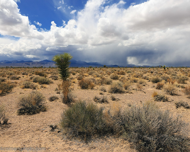Desert and Thunderstorm, Lincoln County, NV