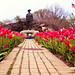 Tulips at the Rockery, Wakefield, MA