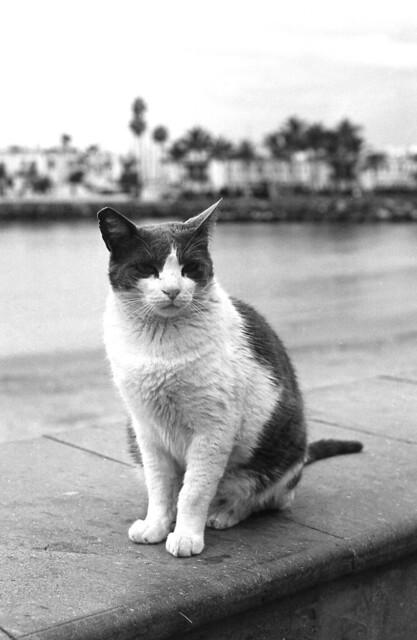 El gato y la playa