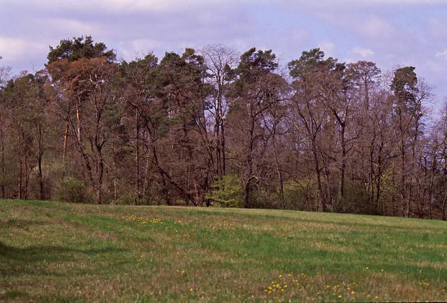 Bäume in Brandenburg 23.4.2021