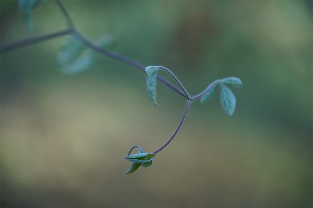 artful nature