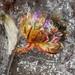 Thrift flower crystallised in salt