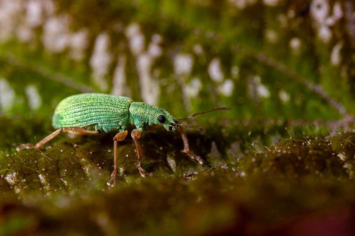 Macros/  proxi/  insectes  - Page 21 51160081361_681bd9ea8f_o