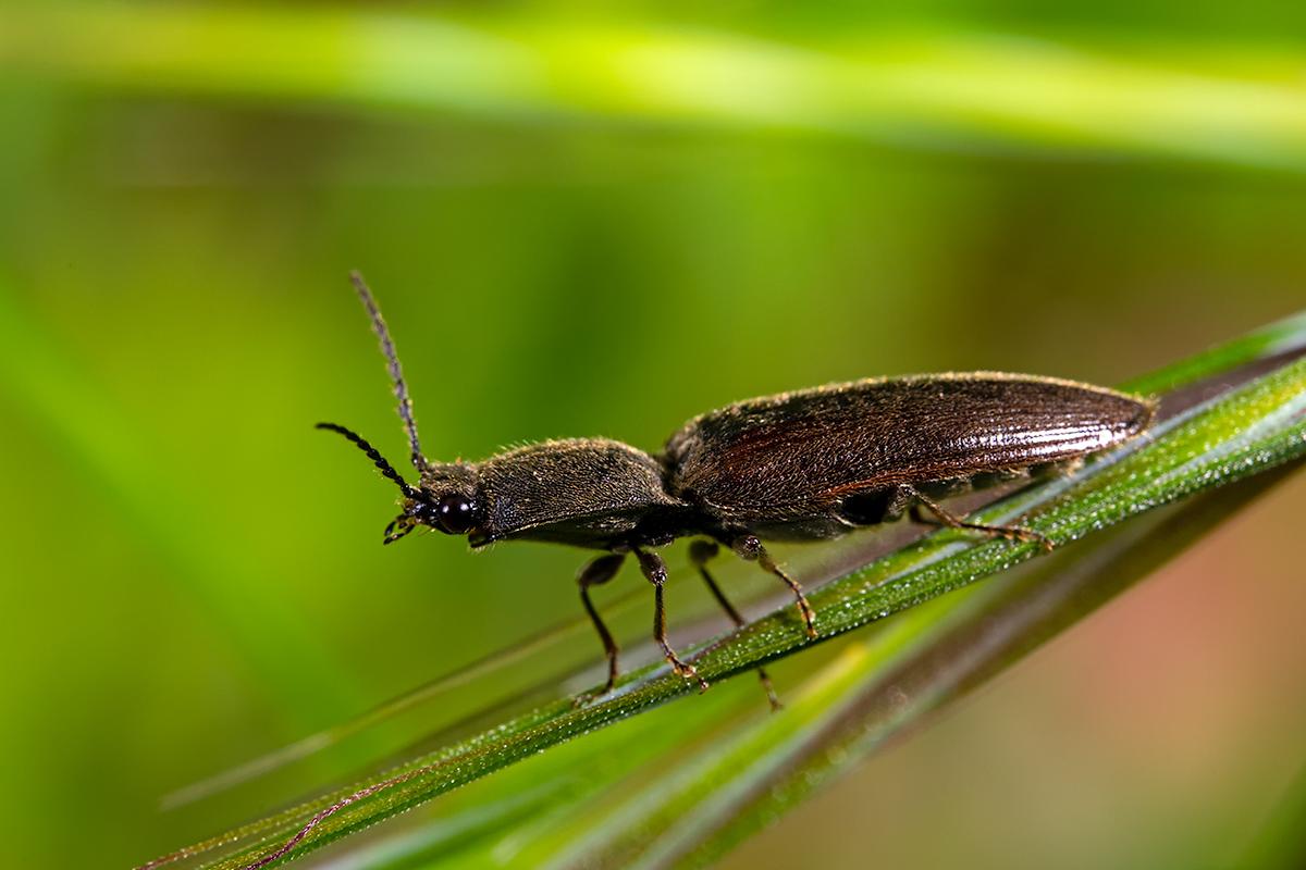 Macros/  proxi/  insectes  - Page 21 51160081546_3578955b8f_o