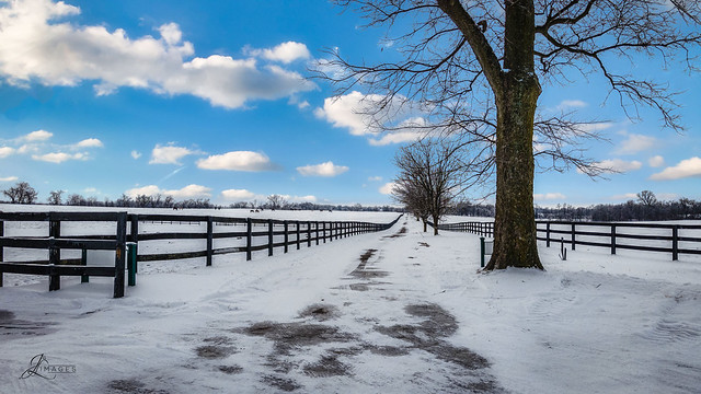 Snow at the Horse Farm