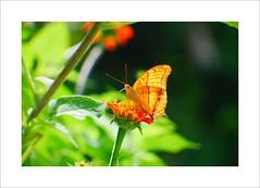 Butterfly by GeorgeTan#3