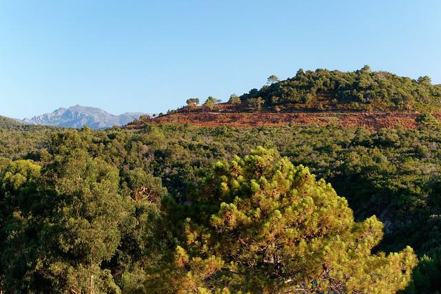 Castagniccia forest