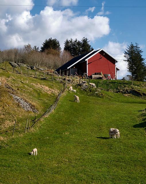 «Springsigns» , Norway
