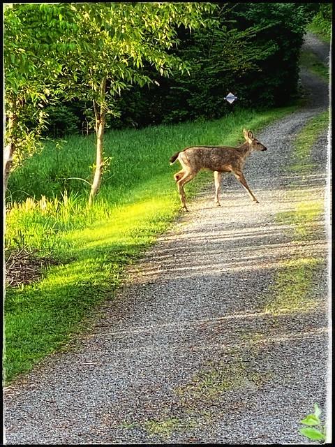 A sighting in kenmore washington