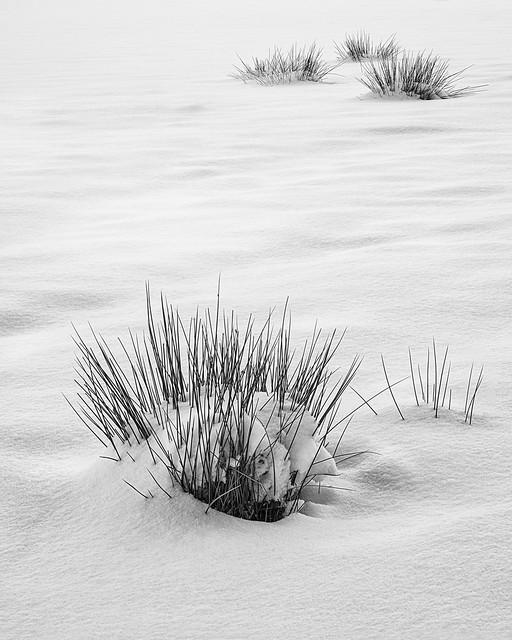 field in winter | Auchterarder | Perthshire