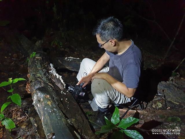 Photographing mushrooms - 20210505_003008x